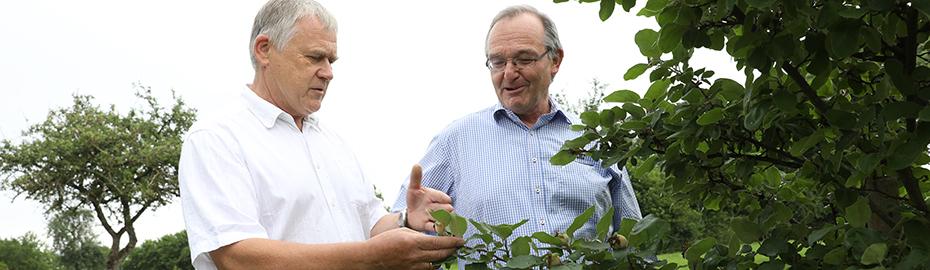 Naturschutz - Kultivierung von heimischen Obstsorten